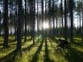 Les 2/3 de la Finlande sont recouverts de fôret