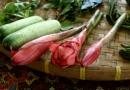 En rose, la fleur de gingembre (elle se mange)