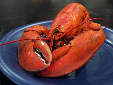 Voyage gourmand au qu bec cookismo recettes saines - Comment couper un homard cuit en deux ...