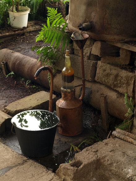 Récupératio de l'huile essentielle de géranium