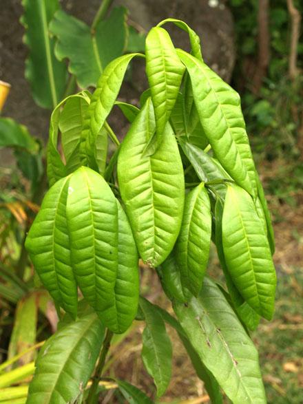 les plantes tropicales epices
