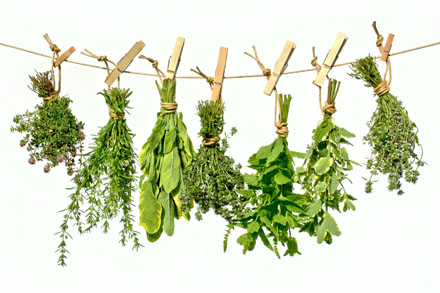Plantes aromatiques © Team 5 - Fotolia.com