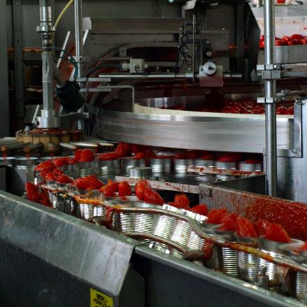 Mise en boîte des tomates pelées