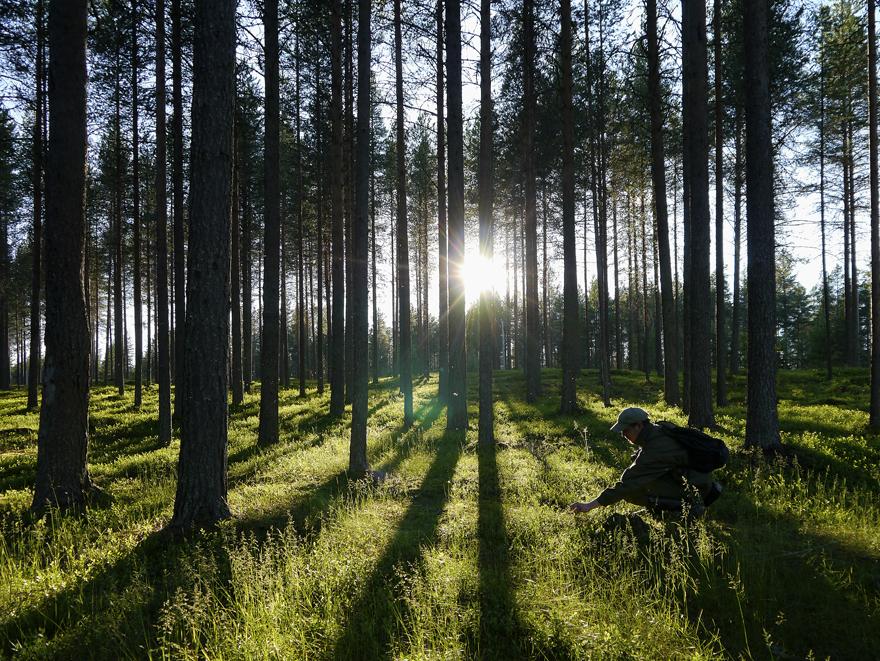 foret-finlande-880©visit-finland