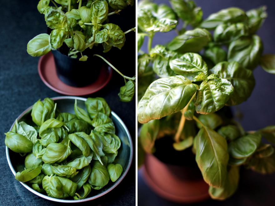 Pesto végétal - Vegan pesto